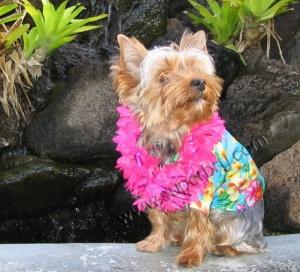 наряд на гавайскую вечеринку