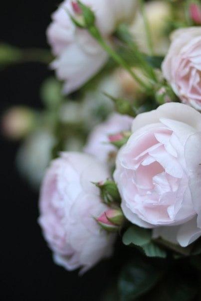 розовая свадьба как отметить